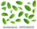 fresh mint leaves pattern... | Shutterstock . vector #1051106210