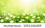 nature summer background with... | Shutterstock . vector #1051106309