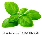 Fresh Basil Leaf Isolated On...