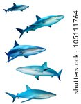 Sharks Isolated On White...