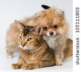 Cat And Puppy  In Studio On A...