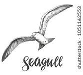 bird seagull   wildlife hand... | Shutterstock .eps vector #1051162553