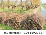 with ropes bundled osiers piled ...   Shutterstock . vector #1051193783