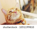 curious staring eyes.the cute... | Shutterstock . vector #1051199810