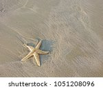 starfish alive on the beach... | Shutterstock . vector #1051208096