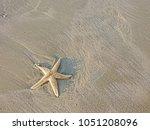 starfish alive on the beach... | Shutterstock . vector #1051208096