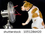 having a dog day and stying...   Shutterstock . vector #1051286420