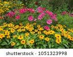rudbekia flowers and cosmos '... | Shutterstock . vector #1051323998
