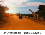 A Jeep Stops While A Giraffe...
