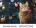 Stock photo funny cat at home sitting at home beautiful christmas background with a new year daccor christmas 1051427246