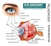 Human Eye Anatomy Infographics...