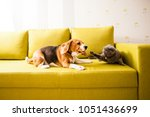 Stock photo dog vs cat 1051436699