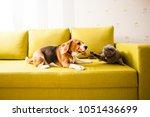 Stock photo dog vs cat 1051436699