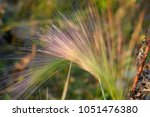 stem of a plant on a blurred... | Shutterstock . vector #1051476380