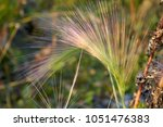 stem of a plant on a blurred... | Shutterstock . vector #1051476383