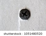 Small photo of Black screw is screwed into a gypsum plasterboard drywall wall in the house is under construction, remodeling, rebuilding and renovation.Close-up