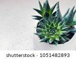 Succulent Haworthia Fasciata...