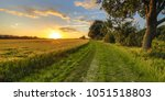 Wheat field along old oak track at sunset on Dutch countryside
