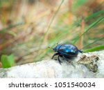 black beetle in to the forest... | Shutterstock . vector #1051540034