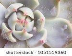 "Close Up Macro Succulent Plant ""..."
