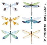 Stock photo watercolor illustration of a dragonfly set of isolated insects 1051822343