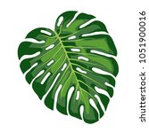 a large leaf of a tropical... | Shutterstock .eps vector #1051900016