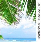 palms overhanging coconut... | Shutterstock . vector #1051951340