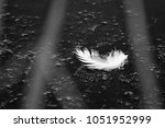 black and white photo of single ... | Shutterstock . vector #1051952999