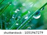 beautiful large drops of fresh... | Shutterstock . vector #1051967279