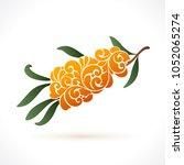 decorative ornate branch of sea ... | Shutterstock .eps vector #1052065274