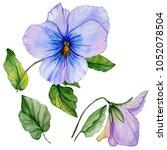 beautiful botanic set  blue and ... | Shutterstock . vector #1052078504