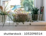 plants in small pots on a... | Shutterstock . vector #1052098514