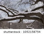 winter park with 200 year old... | Shutterstock . vector #1052158754