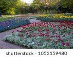tulips   beauty of  nature  in ...   Shutterstock . vector #1052159480