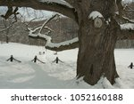 winter park with 200 year old... | Shutterstock . vector #1052160188