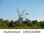 photos of the minneriya... | Shutterstock . vector #1052161844