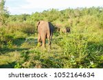 image of the elephants of the... | Shutterstock . vector #1052164634