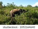 image of the elephants of the... | Shutterstock . vector #1052164640
