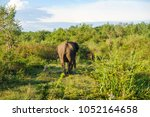 image of the elephants of the... | Shutterstock . vector #1052164658