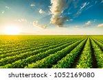 green ripening soybean field ... | Shutterstock . vector #1052169080