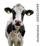 cow on white background   Shutterstock . vector #1052215499