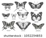 tropical butterfly collection ... | Shutterstock .eps vector #1052254853