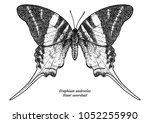 graphium androcles  giant...   Shutterstock .eps vector #1052255990