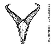 skull of a goat with straight... | Shutterstock . vector #1052268818