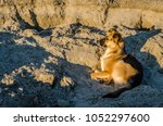 portrait of a dog lying on the... | Shutterstock . vector #1052297600