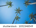 Coconut Tree Under Blue Sky - Fine Art prints