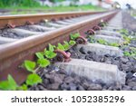 small tree grow up near the...   Shutterstock . vector #1052385296
