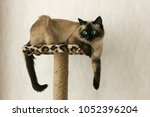cat resting on small cat tower... | Shutterstock . vector #1052396204