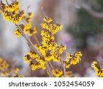 yellow and burgundy... | Shutterstock . vector #1052454059