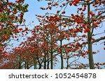 bright and lush bombax ceiba | Shutterstock . vector #1052454878